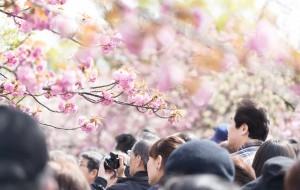 東京 都心 賞櫻 景點